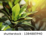 blurred image of nature view  ... | Shutterstock . vector #1384885940