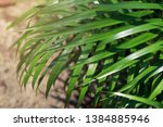 blurred image of nature view  ... | Shutterstock . vector #1384885946