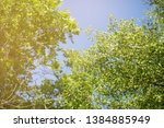 nature view   green leaf in... | Shutterstock . vector #1384885949