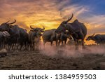 Crowd Buffalo In Sunset At...