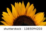 Close Up Of Sunflower On Black...
