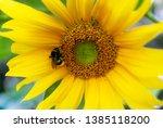 Beautiful Yellow Flower Of...
