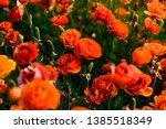 Peonies Ranunculus Flowers...
