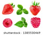 set berry strawberry and...   Shutterstock . vector #1385530469