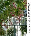 laeken  brussels belgium  april ... | Shutterstock . vector #1385537000