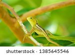close up detail from the... | Shutterstock . vector #1385645546