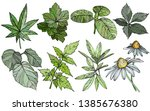 vector set branches and leaves  ... | Shutterstock .eps vector #1385676380