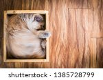 Stock photo soft cat delivery in wooden box cat sleep in wooden box cute and safe 1385728799