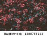 bougainvillea  paper flower ...   Shutterstock . vector #1385755163