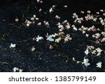small white flowers fall on...   Shutterstock . vector #1385799149