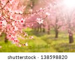 Branches Of Cherry Tree In...