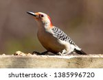 fauna avian colourful colorful... | Shutterstock . vector #1385996720