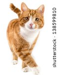 Stock photo red male cat walking towards camera isolated in white 138599810