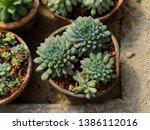 succulent plants in pod top... | Shutterstock . vector #1386112016