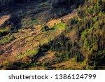 samaba rice terrace fields in... | Shutterstock . vector #1386124799