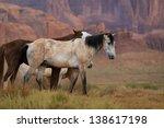 Wild Horses In Monument Valley...