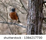 Orange Grey Forest Bird Close...