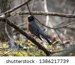 Small Bird Close Up Image....
