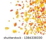 oak  maple  wild ash rowan... | Shutterstock .eps vector #1386338330