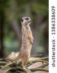 cute meerkats in various... | Shutterstock . vector #1386338609