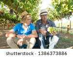 agricultural checking quality... | Shutterstock . vector #1386373886