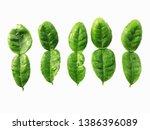 bergamot leaves isolated on a...   Shutterstock . vector #1386396089