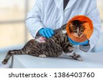 cat with collar after tumor... | Shutterstock . vector #1386403760