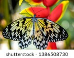 Ome Butterflies From The...