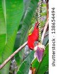 Red parrot bird close up - stock photo