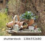 Blue Spring Scylla Flower In...