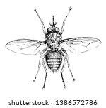 tsetse fly also known as tik... | Shutterstock .eps vector #1386572786