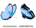 Stock photo butterflies with blue wings tropical insects isolated on white template for design flying 1386586346