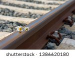Daisies On A Train Rail In The...