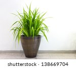 Plant Decoration In Office...