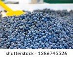 loads of blueberries in a...   Shutterstock . vector #1386745526