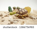 Stock photo africa spurred tortoise are born naturally tortoise hatching from egg cute portrait of baby 1386756983