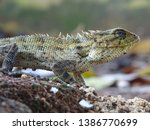 detailed close up photo of male ... | Shutterstock . vector #1386770699