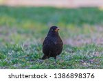 a beautiful female eurasian...   Shutterstock . vector #1386898376