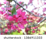 pink apple flowers background.  ... | Shutterstock . vector #1386911333