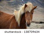 icelandic horse in pasture | Shutterstock . vector #138709634