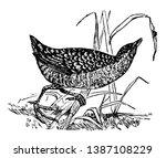 land rail is a bird in the rail ... | Shutterstock .eps vector #1387108229