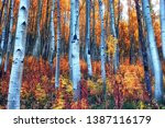 Colorful Aspen Forest With...