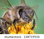 Bee On The Yellow Flower. Clos...
