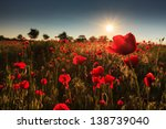 Field Of Red Poppies In Bright...
