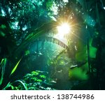 jungle in vietnam | Shutterstock . vector #138744986