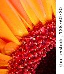 Closeup Photography Of Gerbera...