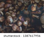 Small photo of civet coffee roasted bean tea color and black color product sale business up and grow up of Thailand