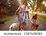 Stock photo professional dog walker funny walking with with dogs outdoors 1387638383