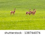 And Three Young Doe Deers...