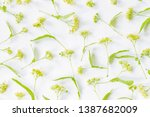 Linden Flowers On A White...